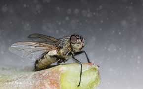 Picture macro, fly, background, insect