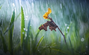 Picture grass, macro, nature, sheet, sprig, rain, butterfly, bokeh, Roberto Aldrovandi