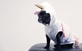 Picture white, clothing, dog, costume, unicorn, pug, black, image, horn, carnival