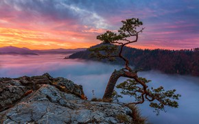Picture forest, the sky, clouds, sunset, mountains, branches, fog, stones, open, tree, rocks, dawn, hills, view, …
