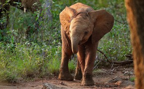 Picture grass, face, branches, nature, pose, elephant, baby, cub, elephant, elephant
