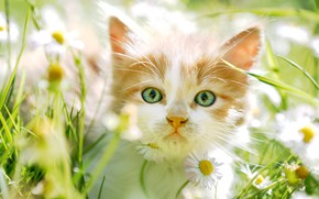 Picture greens, cat, summer, grass, look, light, flowers, close-up, nature, comfort, kitty, heat, mood, glade, portrait, …