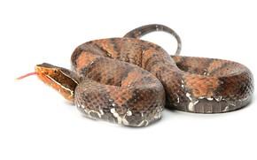 Picture language, snake, white background, José Gabriel Martínez Fonseca Follow