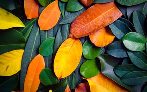 Wallpaper autumn, leaves, background, colorful, texture, background, autumn, leaves
