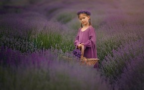 Picture field, flowers, girl, basket, wreath, lavender, lavender field