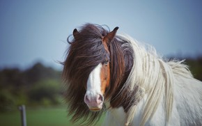 Picture white, the sky, face, background, horse, horse, portrait, mane, spotted