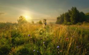 Picture field, grass, trees, landscape, nature, web, morning, Konstantinovo, Rev Alex