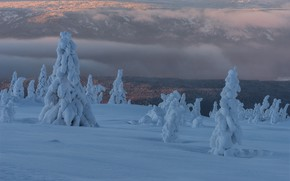 Picture winter, clouds, snow, trees, landscape, nature, fog, morning, ate