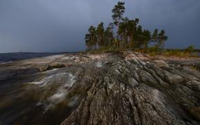 Picture overcast, pine, pond, rocky shore