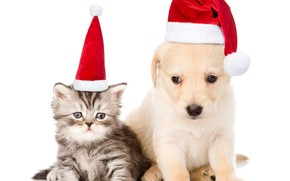 Picture kitty, puppy, New year, kids, cap