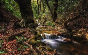 Picture forest, leaves, trees, roots, stream, stones, Greece, Athens