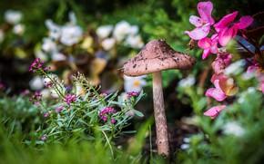 Picture flowers, nature, mushroom, garden, flowers, beds, bokeh, blurred background, mushroom