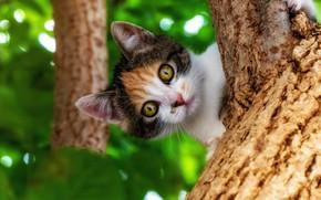 Picture nature, tree, animal, foliage, cub, kitty