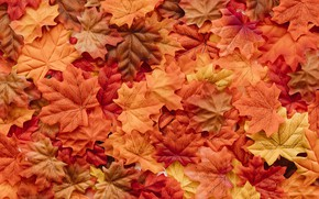 Wallpaper autumn, leaves, background, colorful, background, autumn, leaves, autumn, maple