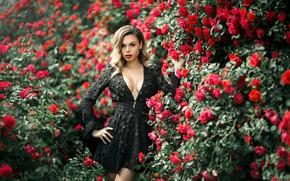 Picture flowers, pose, Girl, dress, neckline, Galina Belokurova, Vitaly Kitaev