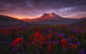 Picture landscape, flowers, mountains, nature, dawn, Washington, USA, meadows