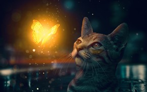 Picture cat, cat, butterfly, muzzle, kitty, cat