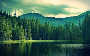 Picture forest, mountains, lake, spruce