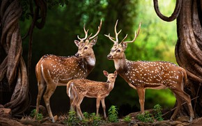 Picture animals, trees, nature, trunks, family, art, deer, fawn