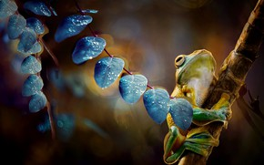 Picture leaves, branches, frog