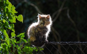 Picture cat, summer, the fence