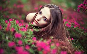 Picture look, girl, flowers, portrait, makeup, hairstyle, brown hair, beautiful, the bushes, nature, posing, bokeh, Lara …