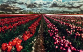 Picture the sky, clouds, flowers, mountains, clouds, spring, gloomy