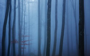 Picture forest, trees, fog, forest, trees, fog, Uschi Hermann