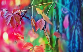Picture autumn, leaves, paint