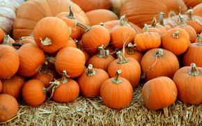 Picture autumn, harvest, pumpkin, straw, orange, a lot, different size