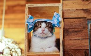 Picture cat, cat, strips, background, Board, portrait, frame, bows, cap, Kote, bokeh, Milota, closed eyes, frame