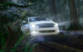 Picture machine, forest, light, trees, lights, optics, Toyota, Sequoia, full-size SUV, TRD Pro