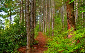 Picture Greens, Path, Trees, Forest, Forest, Trees, Path