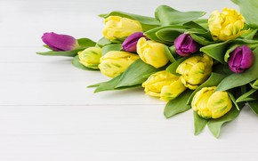 Picture bouquet, spring, tulips