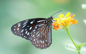 Picture flower, butterfly, ake