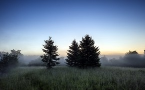 Picture Trees, Dawn, Grass