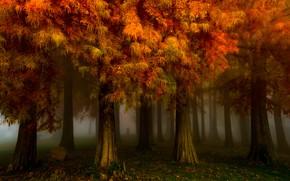 Wallpaper autumn, forest, trees, nature, fog, Park, morning