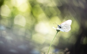 Picture light, butterfly, bokeh
