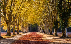 Picture road, trees, autumn