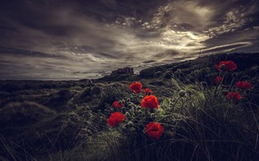 Picture the sky, grass, light, landscape, flowers, clouds, the dark background, castle, Maki, hill, red, twilight, …