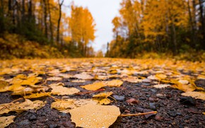 Picture road, autumn, asphalt, leaves, nature, time of the year