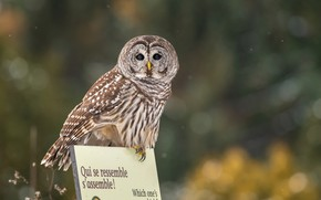Picture look, nature, letters, background, the inscription, owl, bird, plate, beauty, claws, sitting, bokeh, owl, motley