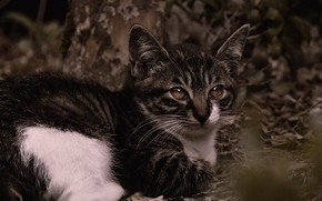 Picture cat, look, leaves, nature, pose, the dark background, kitty, lies, face, bokeh, spotted