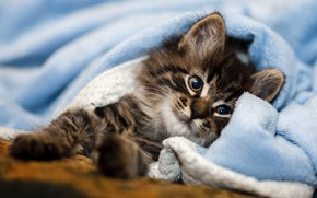Picture cat, kitty, bed, blanket, plaid, kitty, face