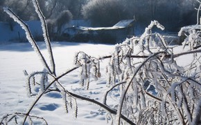 Picture frost, grass, morning, Meduzanol ©