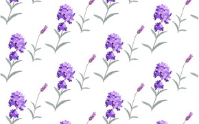 Picture white, flowers, background, texture, background, pattern, lavender, Lavender