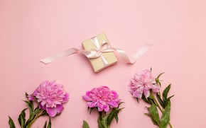 Picture background, pink, gift, bouquet, peonies