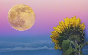 Picture collage, sunflower, The moon