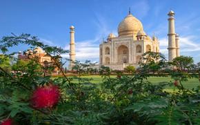 Picture India, Taj Mahal, mosque, architecture, the bushes, the mausoleum, Agra, Taj Mahal, acacia, Agra, India