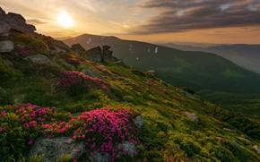 Picture landscape, sunset, mountains, nature, stones, hills, vegetation, the slopes, Ukraine